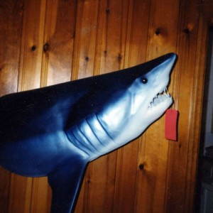 sharktaxidermy2